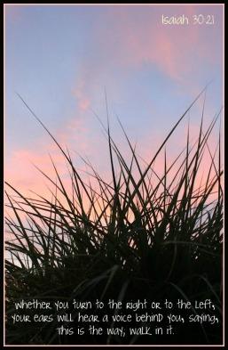 Isaiah 3021 sunset grass
