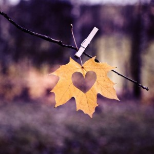 heart in leaf