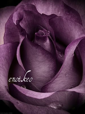 enoikeo