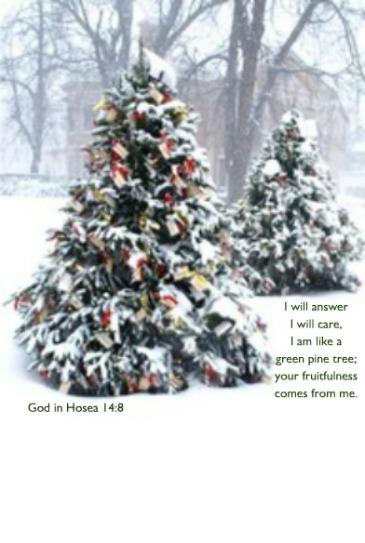 pine trees in snow Hosea 14:8