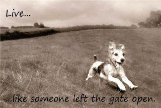 live like someone left the gate open