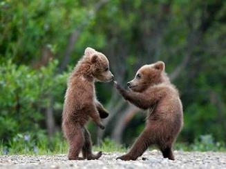 kung fu bears