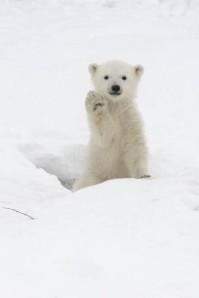bear babye