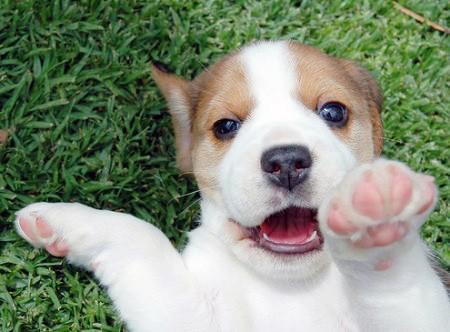 puppy pat