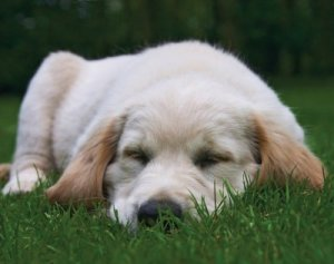 CutePupySleeping