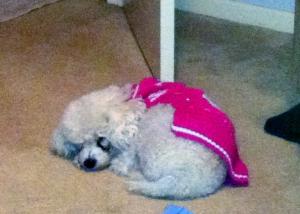 roobee sleeping