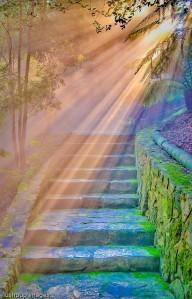 sun rays on the path