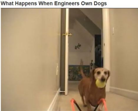 when engineers own dogs