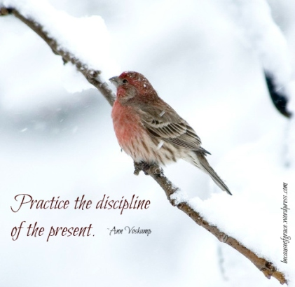 the discipline of the present